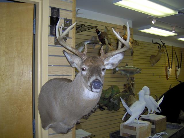 shotgun 2007