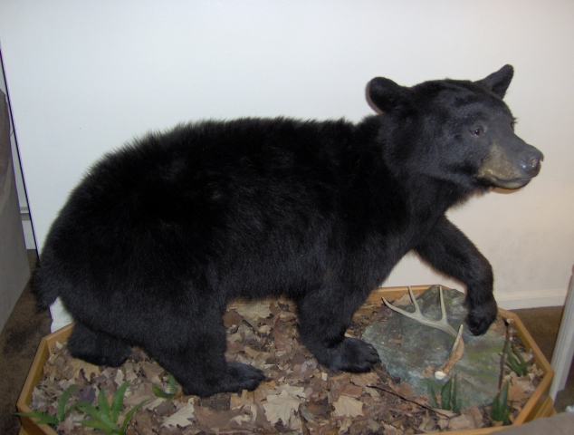NJ Bear