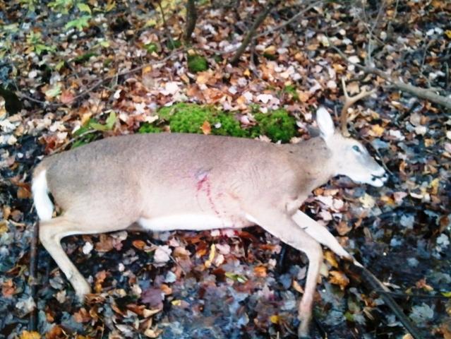 8 point buck 2011