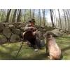 """Ken Beam`s Aussie Cattle Dog, """"Dingo"""" trying to get in """"Turkey Photo Shoot""""!"""