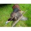 NJ Turkey Hunting Ken Beam