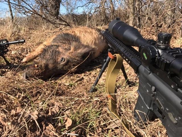 300lb Boar Hunt