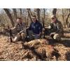 Feral Hog Hunt