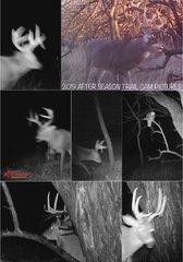2019 Trail Camera Pictures after season closed